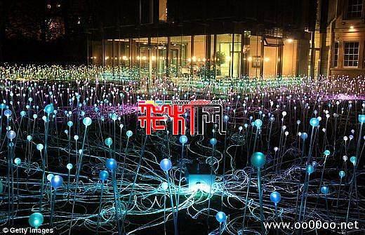 英艺术家用5000盏圣诞灯打造光影花海(组图)