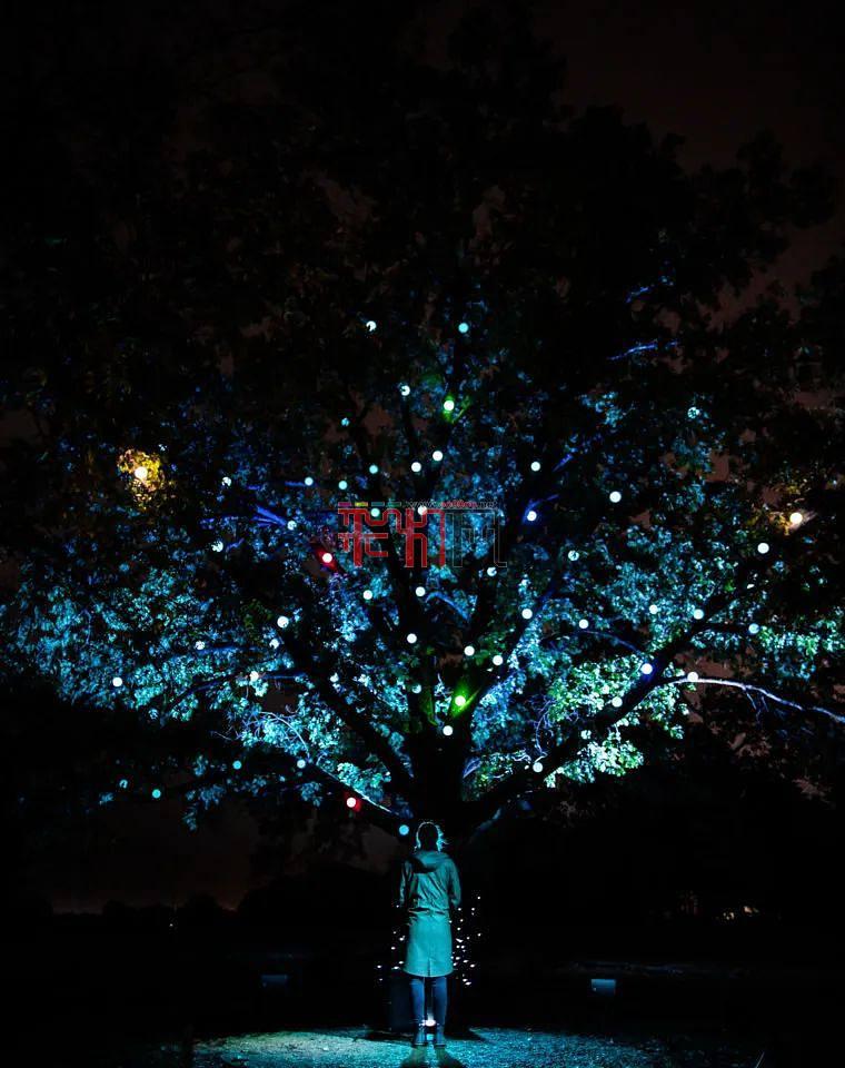 夜游欣赏-数字森林